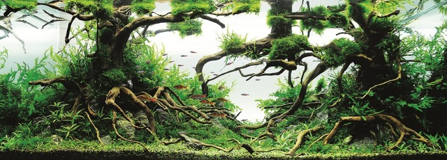 Michael G.W. Wong -Enchanted Forest-