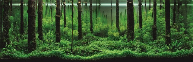 00 Pavel Bautin -Forest Scent-