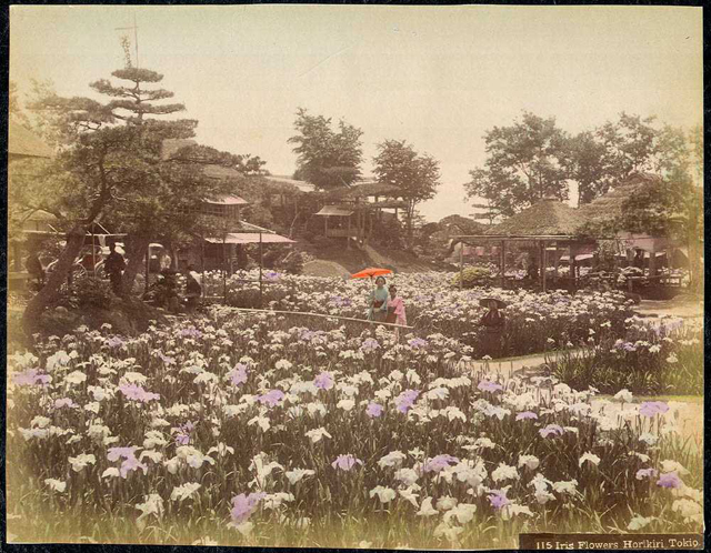 Japan-Meiji-Photos_12.jpg