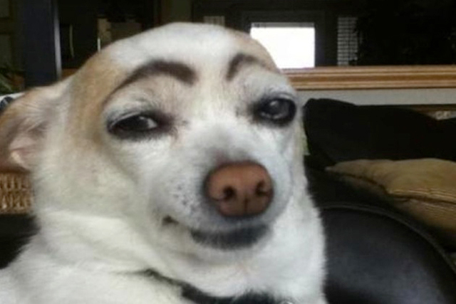 Dogs-with-Human-Eyebrows-01.jpg