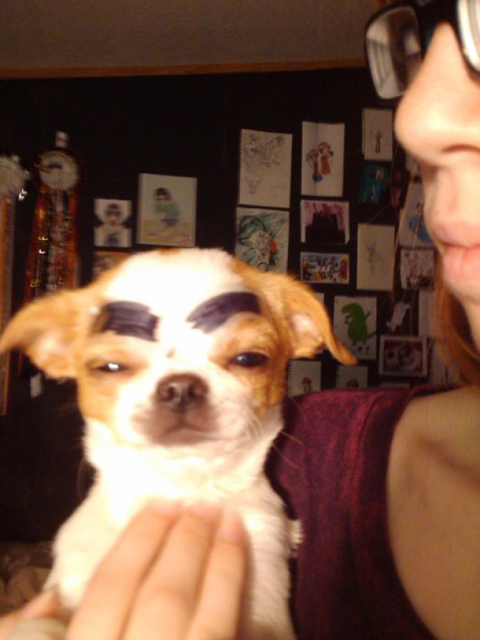 Dogs-with-Human-Eyebrows-07.jpg