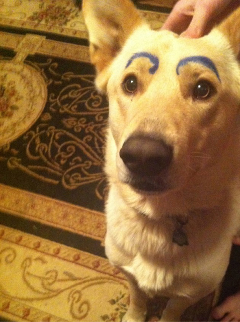 Dogs-with-Human-Eyebrows-02.jpg