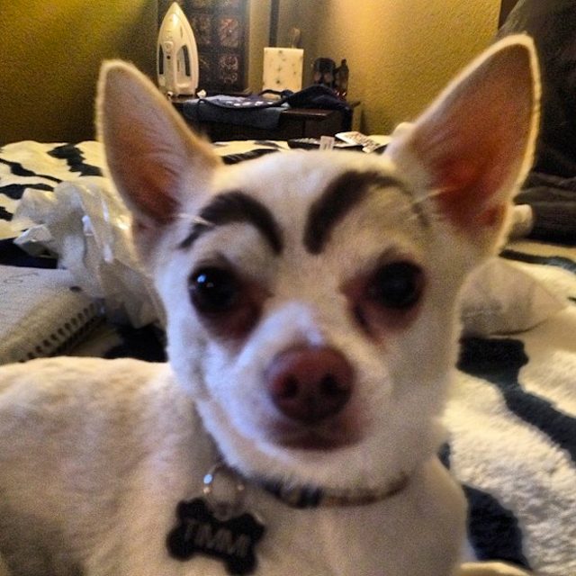 Dogs-with-Human-Eyebrows-08.jpg