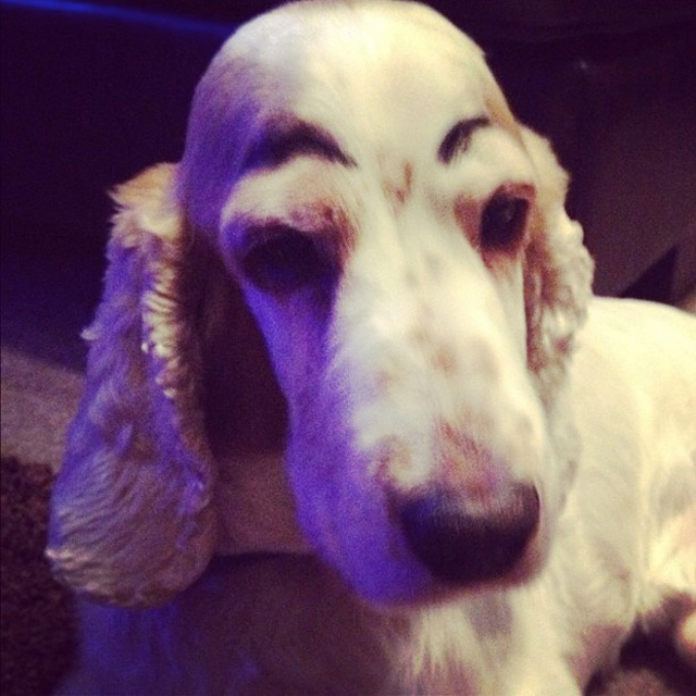 Dogs-with-Human-Eyebrows-09.jpg