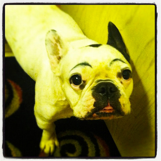 Dogs-with-Human-Eyebrows-11.jpg