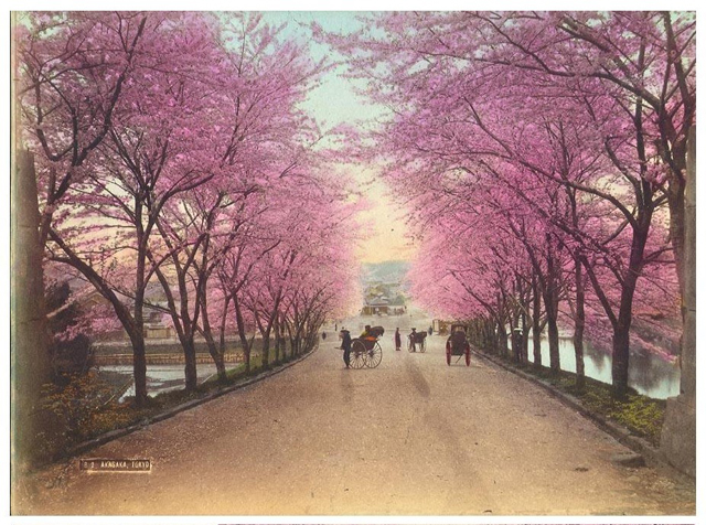 Japan-Meiji-Photos_01.jpg