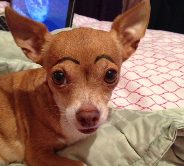Dogs-with-Human-Eyebrows-05.jpg