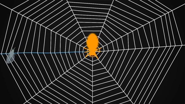 Spiders-Tune-Their-Webs-Like-A-Guitar-04.jpg