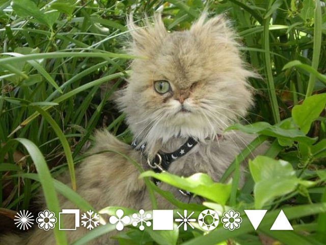cats-as-fonts-11