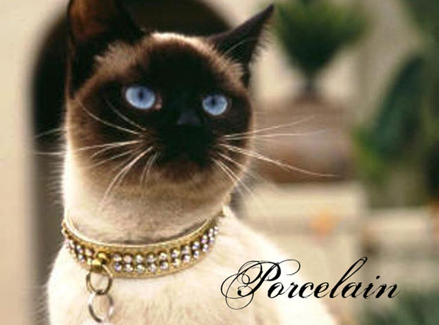 cats-as-fonts-06