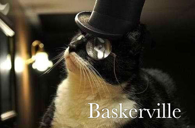 cats-as-fonts-18