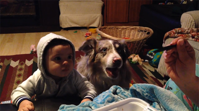 Dog-says-mama-and-baby-cant-01.jpg