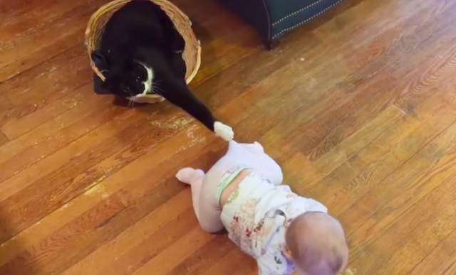 Baby-and-Cat-Fun-and-Fails-5.png